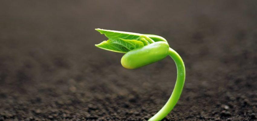 Для того, чтобы стать ростком, нужна смелость